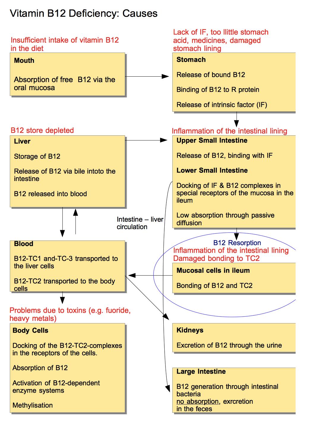 B12 Deficiency Diagram