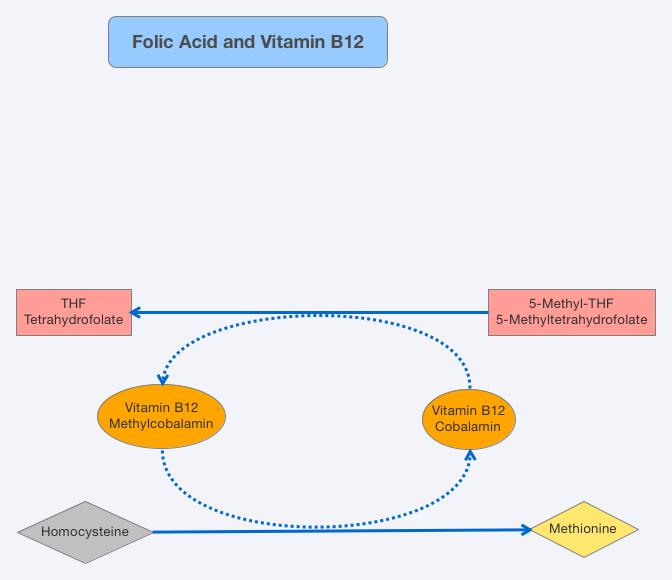 Folic Acid and Vitamin B12