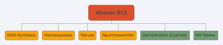 Vitamin B12 Effect