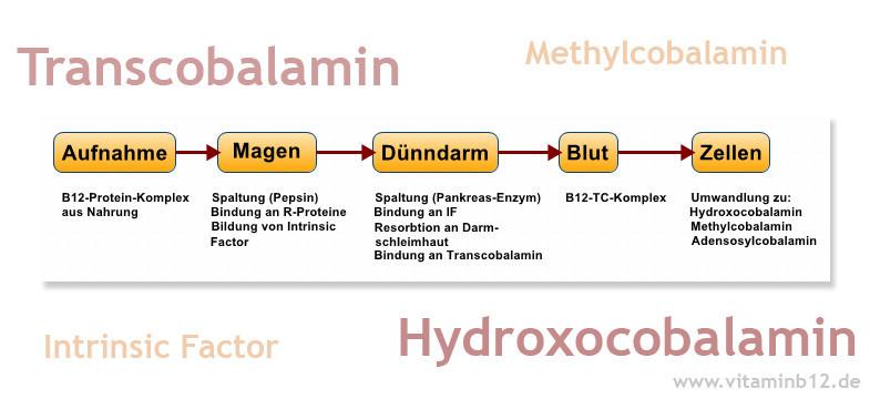Vitamin B12 Malabsorption