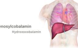 vitamin-b12-body-store-785x360