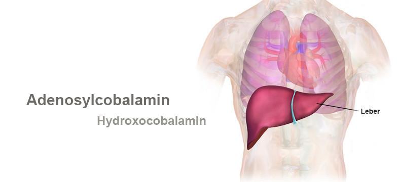 The Body's Vitamin B12 Store