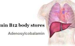 vitamin-b12-body-stores
