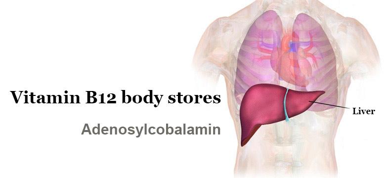 The Body's Store of Vitamin B12