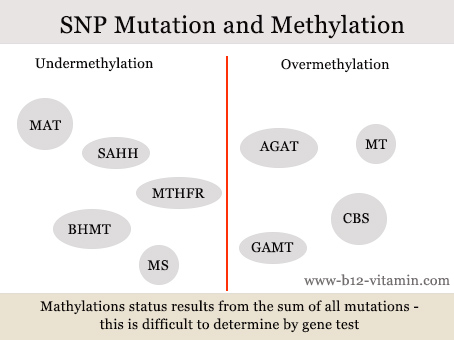methylation-genetic-mutations