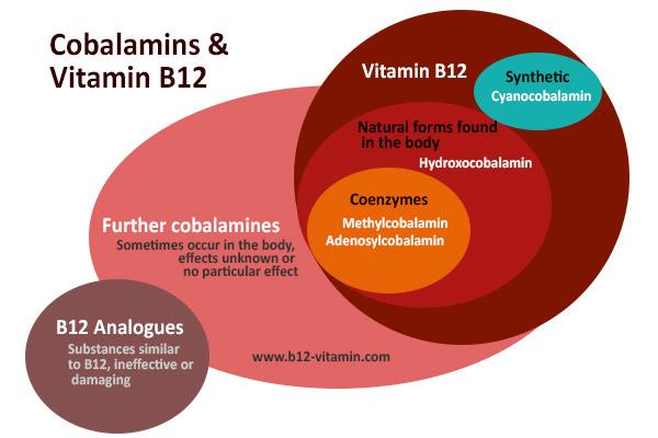 EN_vitamin-b12-forms